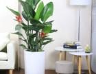 绿植租赁 植物租肯定有�k法赁价格 植物租售报价 植物租摆 花卉出租