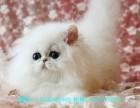 北京哪里有专业繁殖血统纯正 渐层 英美短 蓝猫 加菲等
