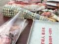 新鲜鳄鱼肉、活体鳄鱼,现宰现卖,欢迎购买
