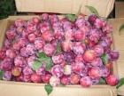 郑州水果采摘好去处 ?新密水果采摘好去处?