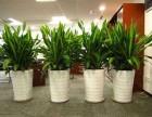 上海松江办公绿植租赁,松江较好的绿植租赁公司