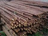 批发唐山绿化支撑杉木杆 竹竿 高压电线防护沙松杆
