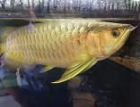 鱼缸观赏鱼特卖