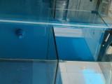 出一台定制海鲜鱼缸 一米二左右