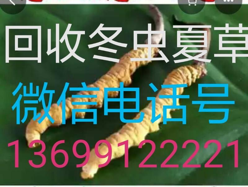 诚意登门丨绵阳市辖区回收冬虫夏草(市场价格)丨防高价诱饵邮寄