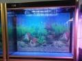 出售精品鱼缸 度量尺寸
