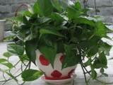全市绿植租摆花卉租赁植物养护即刻订购享优惠