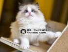 呼和浩特布偶猫多少钱 呼和浩特哪里有卖布偶猫价格呼和浩特猫舍