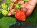 草莓采摘园 榆兴农庄