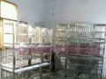 长期出售各种型号不锈钢狗笼