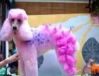 赣州市宠物美容造型修剪