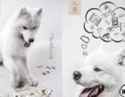 宠物肖像摄影