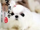 丽江哪里有卖马尔济斯犬的