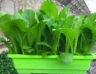 盆栽有机蔬菜批发,盆栽技术加盟,昱旸天地