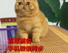 珠海哪里有卖加菲猫多少钱一只纯种加菲猫好养吗已做好疫苗