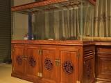 广东广州哪里有出租海洋生物展的展览-洋清水族租赁公司