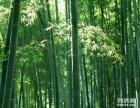 泾河工业园原点新城泾河新城代理记账纳税申报 验资审计