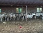 台安老边村天成牧业养牛厂房 3000平米