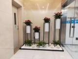 东莞道滘绿植租赁.花卉租摆.免费上门设计