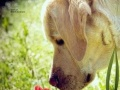 常年提供专业宠物寄养服务