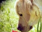 青岛家庭式宠物狗狗猫咪寄养元旦春节提前预约