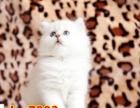 家养猫咪繁殖,已经满月,打疫苗后找有爱的家
