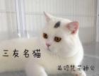 矮脚 银点 乳白 蓝白 梵花 蓝猫多只种对外借配