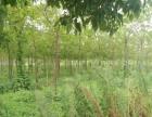 低价出租新北奔牛8亩土地,价格一年9.6万