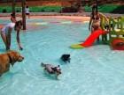 天ω 河宠物乐园 游泳 寄养 训练 美容 繁殖销售