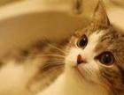 宠物猫洗澡 宠物用品