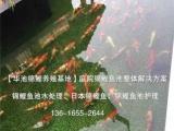 绍兴别墅景观鱼池设计,绍兴锦鲤鱼池过滤系统,绍兴花园鱼池