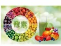 日本yooko酵素茶新型酵素纤体茶