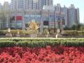 北京少儿围棋暑期班价格 围棋暑假培训多少钱