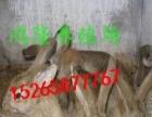 肉兔种兔养殖,肉兔饲养方法,肉兔的疾病防疫