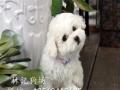 广州狗粮厂直销天然双拼狗粮,0添加。美毛、淡化泪痕