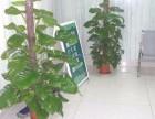 苏州花卉租赁 花卉租摆公司 办公室租花-苏州小园丁园艺