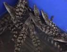 鳄鱼养殖鳄鱼苗活体鳄鱼鳄鱼肉出售