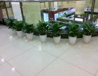 广刀芒州花卉租赁,花木租赁,花卉租摆,花木租摆,植物租赁