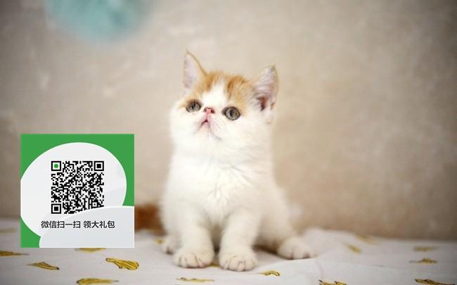 镇江哪里有宠物店 镇江哪里卖宠物猫便宜 镇江加菲猫价格