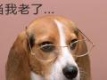 青岛世纪派特宠物医院