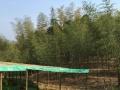 竹林养鸡场转让14亩土地
