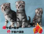 纯血繁育虎斑幼猫 公母都有 可来家挑选