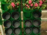 长沙立体绿化花盆哪里有供应-立体绿化植物