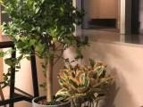北京崇文辦公室植物租賃花卉租賃