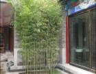 室内栽培竹子品种,盆栽竹子哪里有卖
