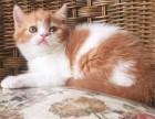 欢迎爱猫人士我们携手一起给可爱的猫咪一个新家