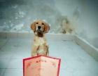 爱犬训犬提供宠物训练和寄养等