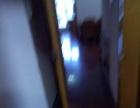 思明周边顶澳仔 2室1厅70平米 中等装修 押一付三
