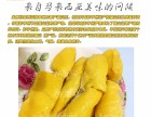 马来西亚特产美食 猫山王榴莲 新鲜冷冻猫山王榴莲