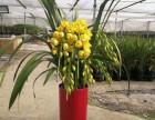 苏州园区植物租赁,苏州小园丁园艺,专业绿植租摆方案租金低